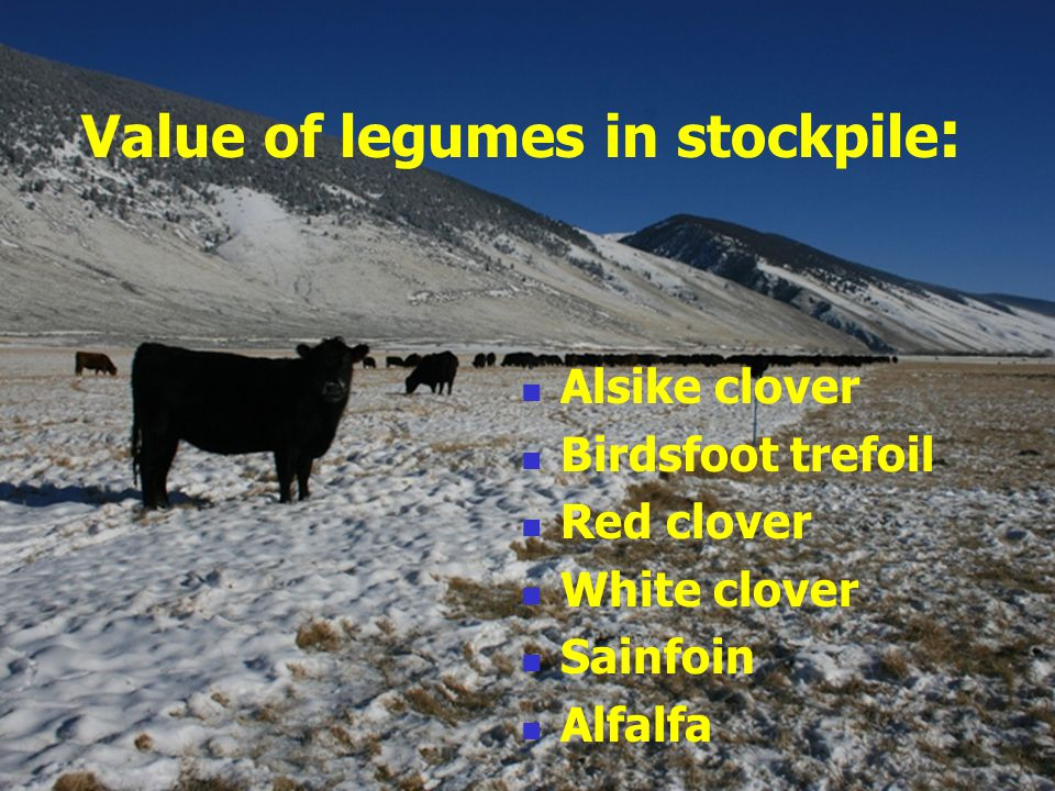 Value of legumes in stockpile : Alsike clover Birdsfoot trefoil Red clover White clover Sainfoin Alfalfa