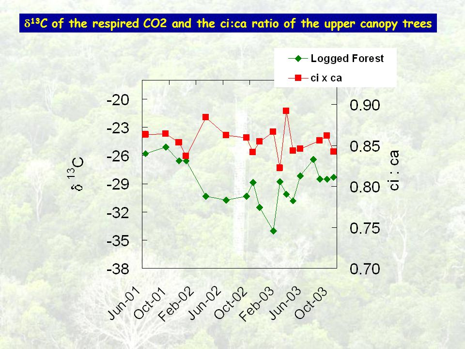 13 C of the respired CO2 and the ci:ca ratio of the upper canopy trees