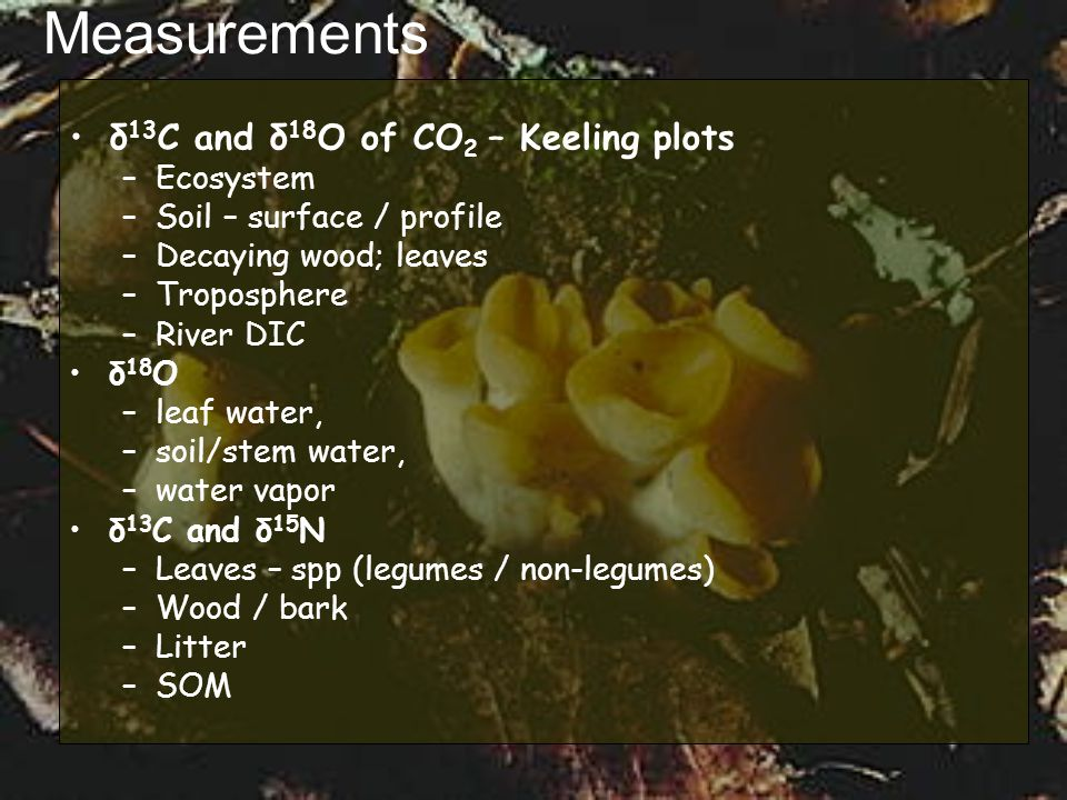 Measurements δ 13 C and δ 18 O of CO 2 – Keeling plots –Ecosystem –Soil – surface / profile –Decaying wood; leaves –Troposphere –River DIC δ 18 O –lea