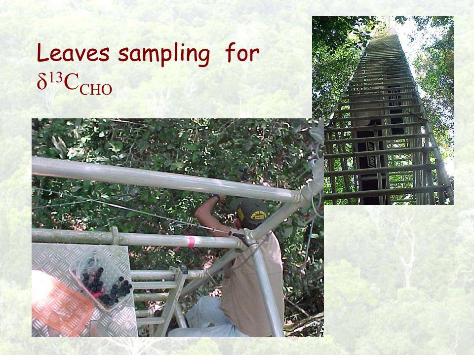Leaves sampling for δ 13 C CHO