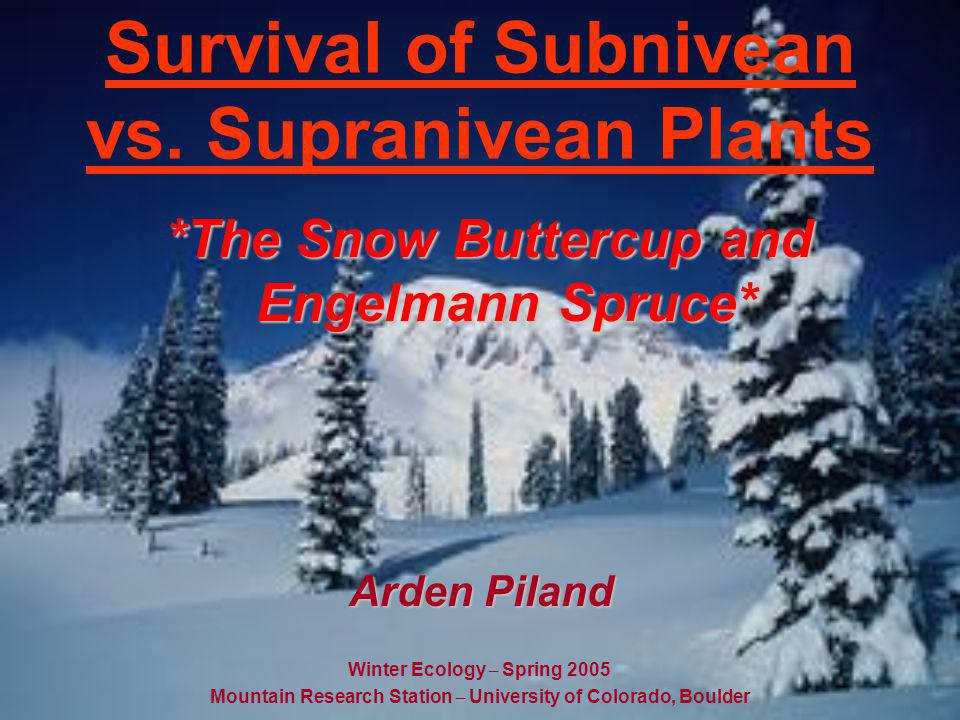 Two Environments Subnivean: The environment below the snow (Snow buttercup) Supranivean: The environment above the snow (Engelmann Spruce)