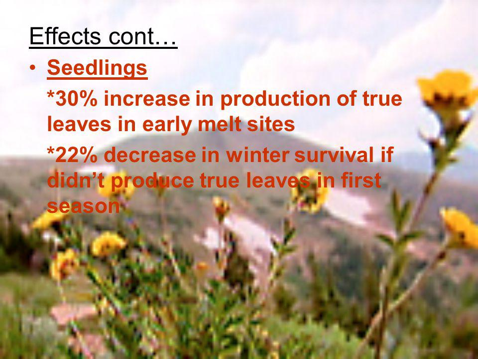Effects cont… Seedlings *30% increase in production of true leaves in early melt sites *22% decrease in winter survival if didnt produce true leaves in first season