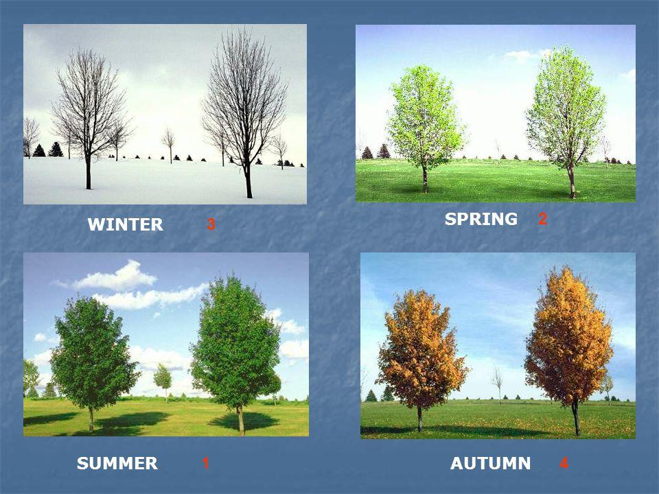 WINTER SPRING SUMMERAUTUMN 3 2 14