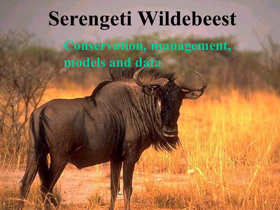 Serengeti Wildebeest Conservation, management, models and data