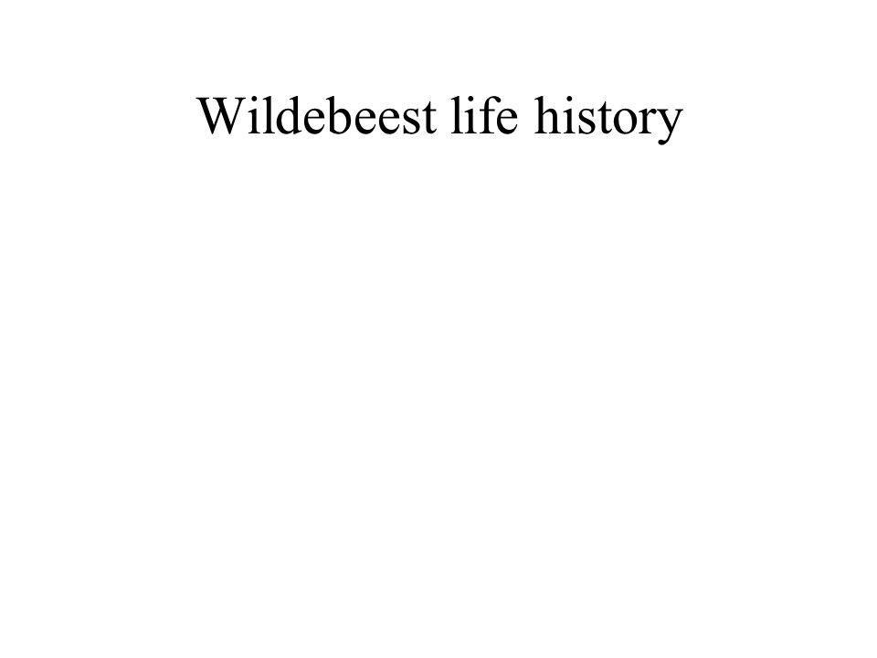 Wildebeest life history