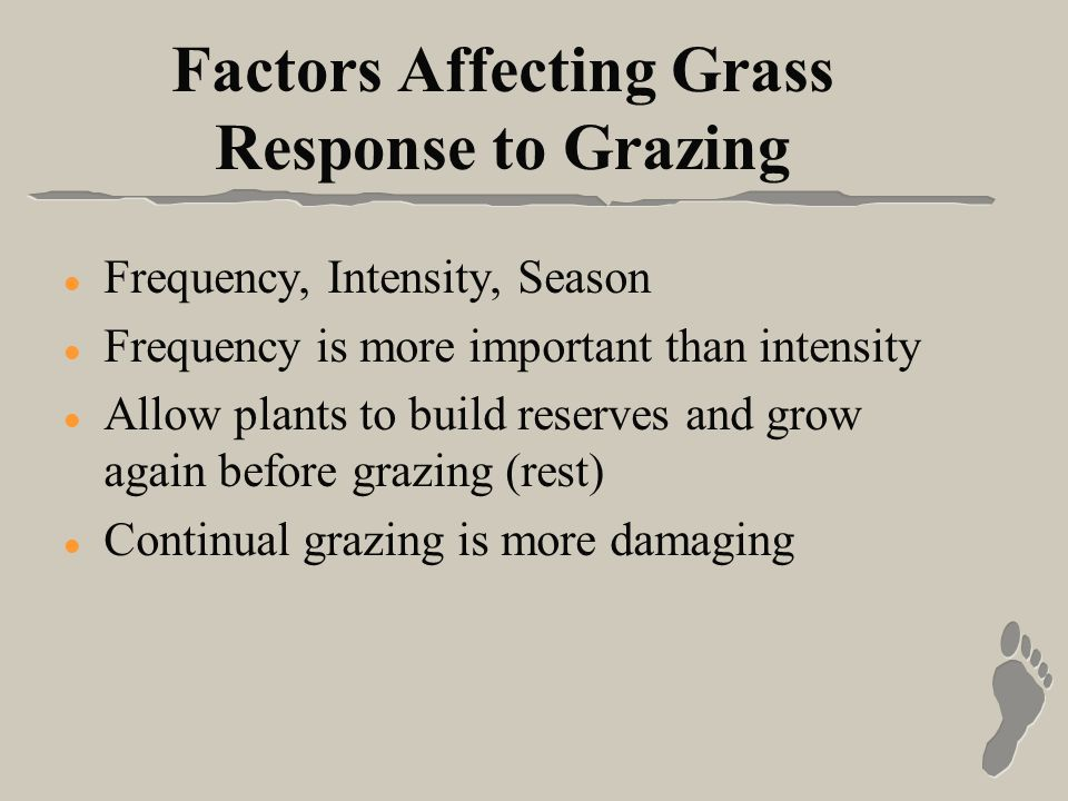 Factors Affecting Grass Response to Grazing l Frequency, Intensity, Season l Frequency is more important than intensity l Allow plants to build reserves and grow again before grazing (rest) l Continual grazing is more damaging