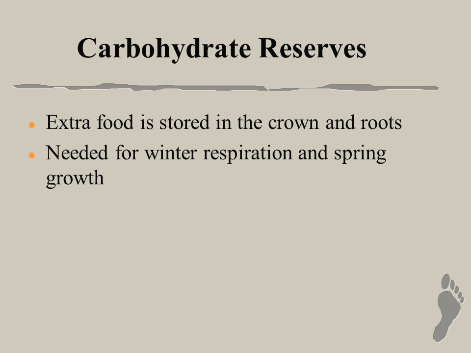 Carbohydrate Reserves l Extra food is stored in the crown and roots l Needed for winter respiration and spring growth
