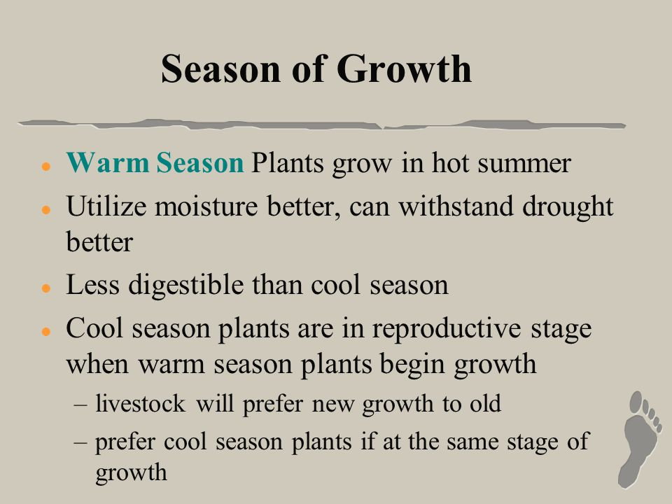 Season of Growth l Warm Season Plants grow in hot summer l Utilize moisture better, can withstand drought better l Less digestible than cool season l Cool season plants are in reproductive stage when warm season plants begin growth –livestock will prefer new growth to old –prefer cool season plants if at the same stage of growth
