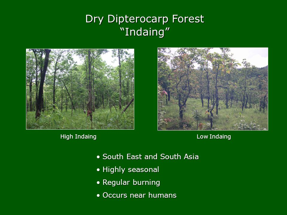 Dry Dipterocarp Forest Indaing High Indaing Low Indaing South East and South Asia South East and South Asia Highly seasonal Highly seasonal Regular burning Regular burning Occurs near humans Occurs near humans