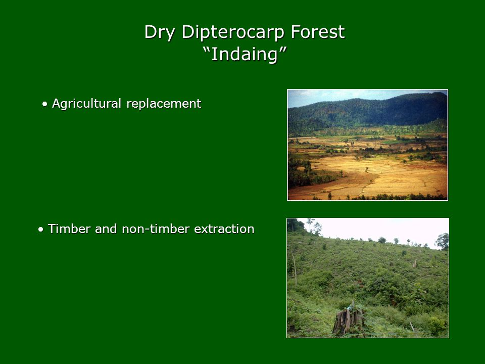 Indaing Agricultural replacement Agricultural replacement Timber and non-timber extraction Timber and non-timber extraction
