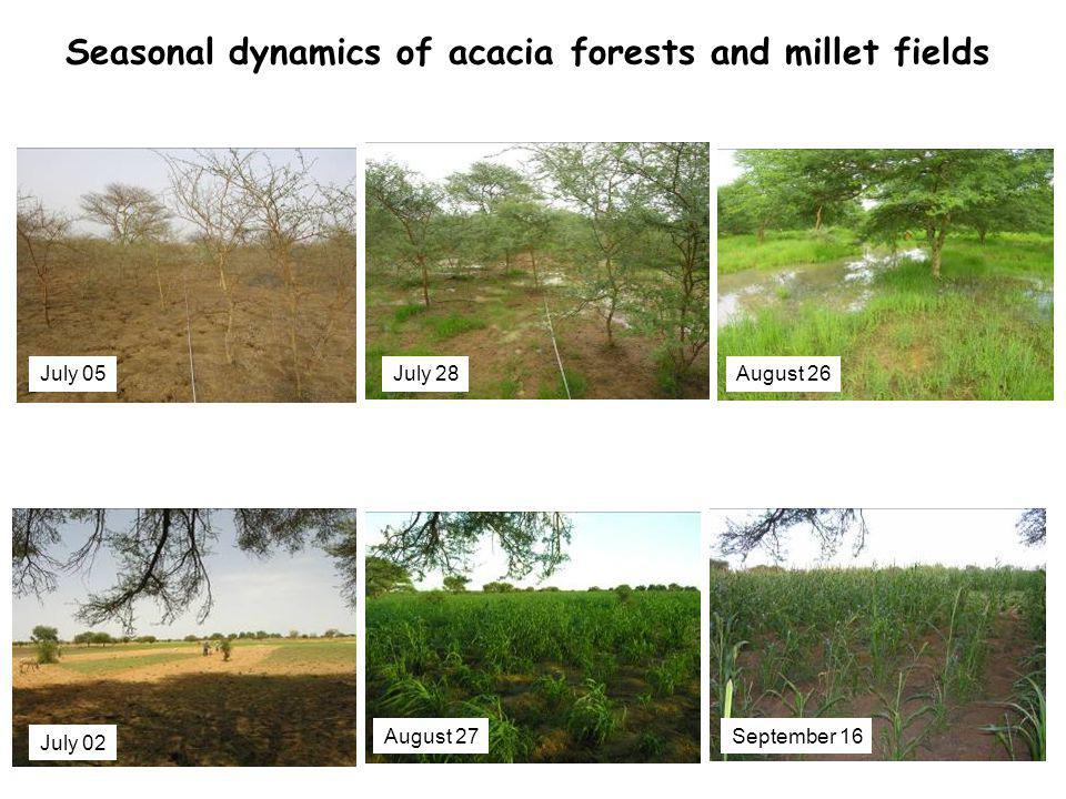 July 05August 26July 28 July 02 August 27September 16 Seasonal dynamics of acacia forests and millet fields