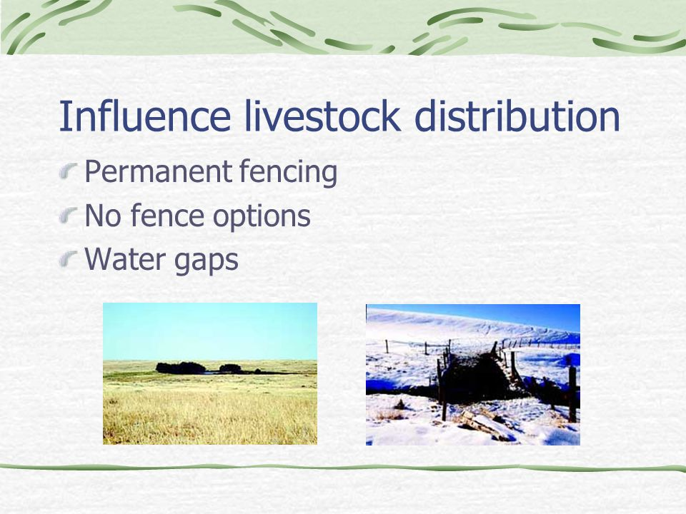 Influence livestock distribution Permanent fencing No fence options Water gaps