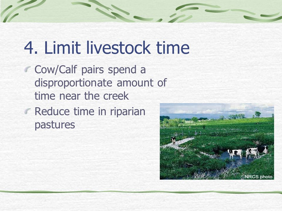 4. Limit livestock time Cow/Calf pairs spend a disproportionate amount of time near the creek Reduce time in riparian pastures