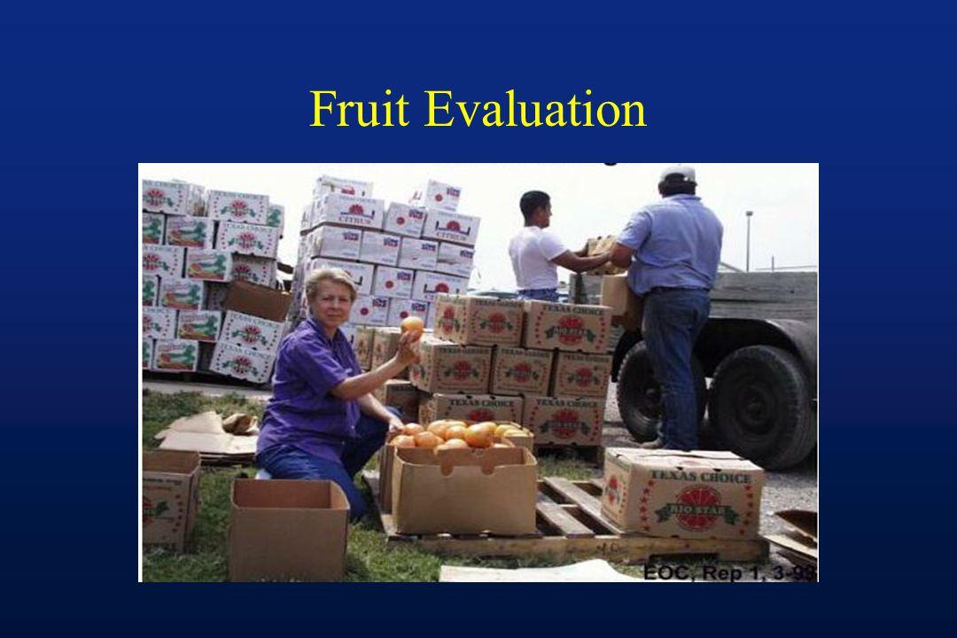 Fruit Evaluation