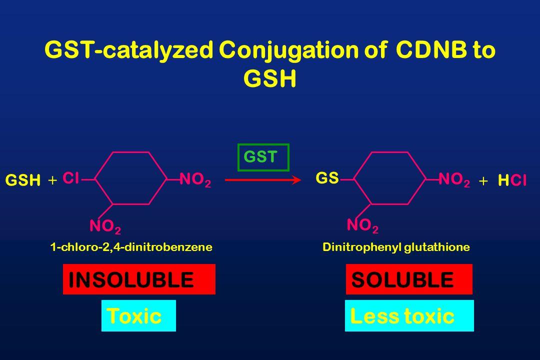 NO 2 Cl GSH GST NO 2 GS HCl GST-catalyzed Conjugation of CDNB to GSH 1-chloro-2,4-dinitrobenzeneDinitrophenyl glutathione INSOLUBLESOLUBLE ToxicLess toxic