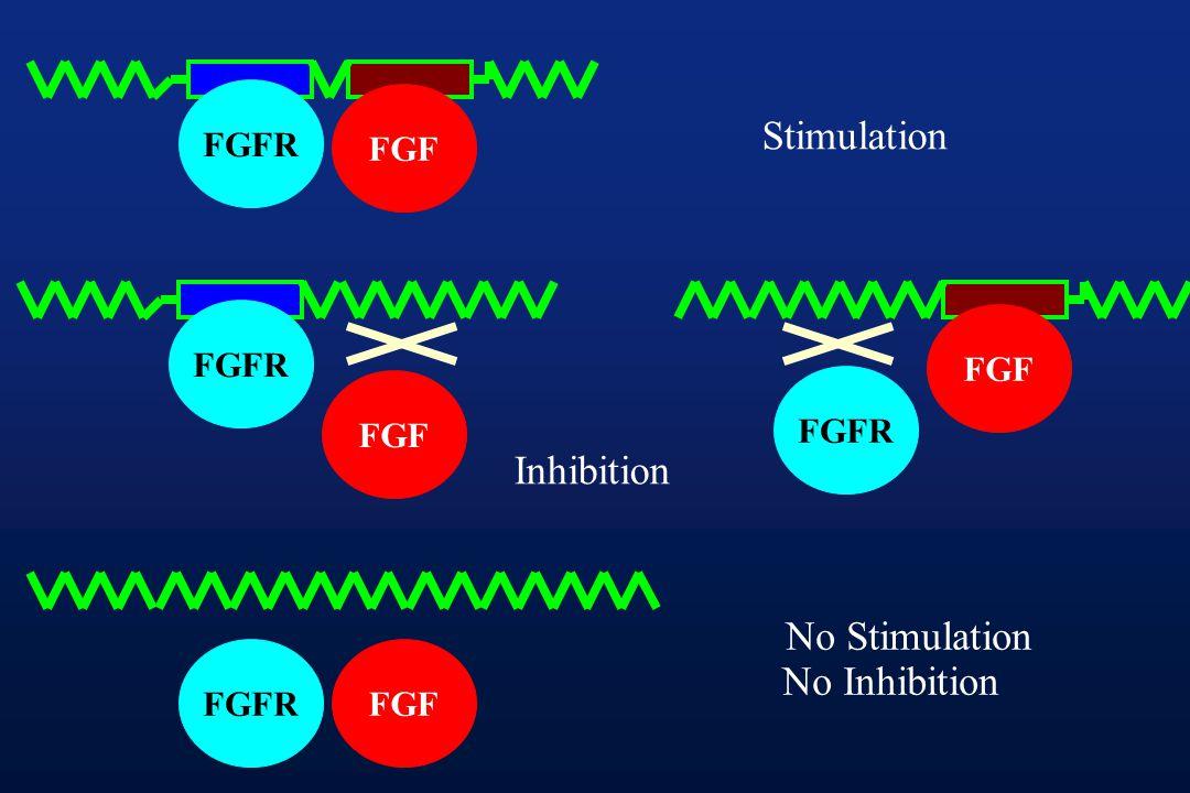 FGFR FGF FGFR FGF FGFR FGF FGFRFGF Stimulation Inhibition No Stimulation No Inhibition