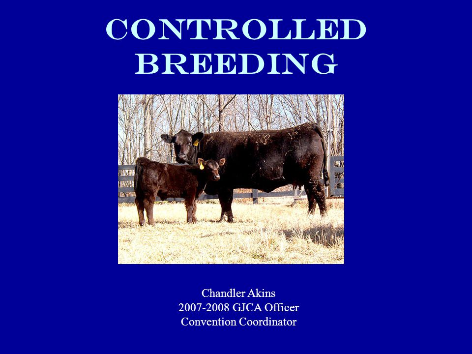Controlled Breeding Chandler Akins GJCA Officer Convention Coordinator