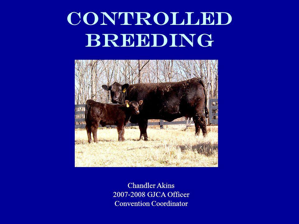 What is controlled breeding.A set plan to shorten the calving season.