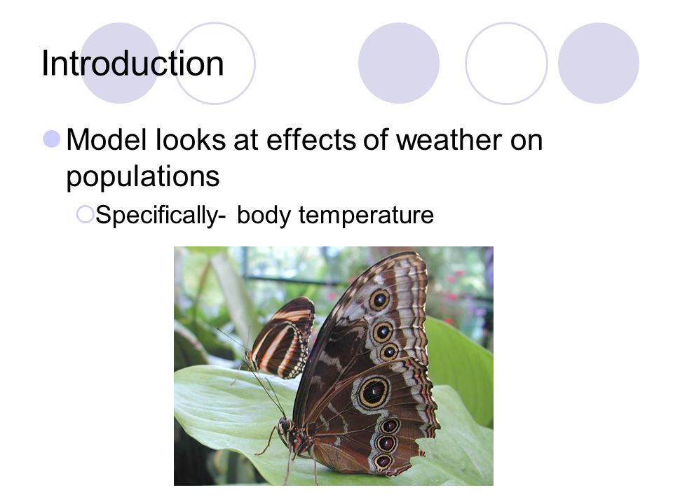 Introduction Model looks at effects of weather on populations Specifically- body temperature