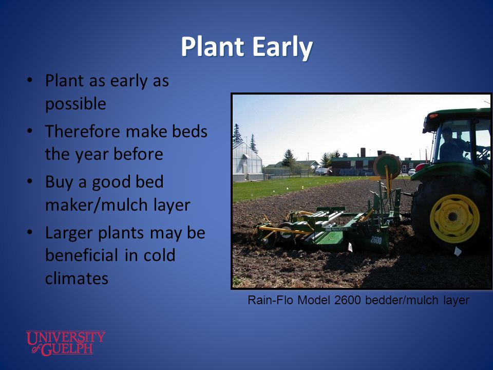 Plant Early Plant as early as possible Therefore make beds the year before Buy a good bed maker/mulch layer Larger plants may be beneficial in cold cl