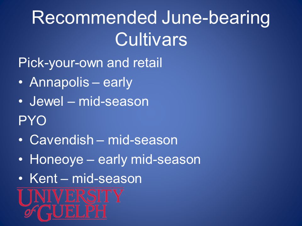 Recommended June-bearing Cultivars Pick-your-own and retail Annapolis – early Jewel – mid-season PYO Cavendish – mid-season Honeoye – early mid-season
