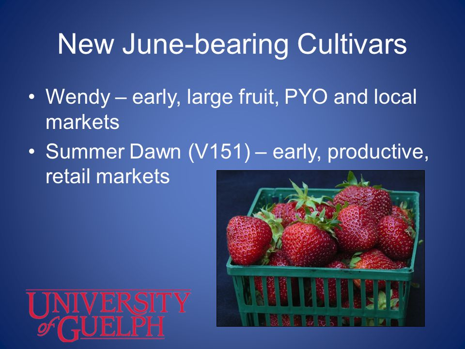 New June-bearing Cultivars Wendy – early, large fruit, PYO and local markets Summer Dawn (V151) – early, productive, retail markets