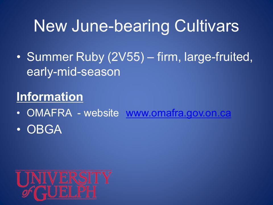 New June-bearing Cultivars Summer Ruby (2V55) – firm, large-fruited, early-mid-season Information OMAFRA - website www.omafra.gov.on.cawww.omafra.gov.