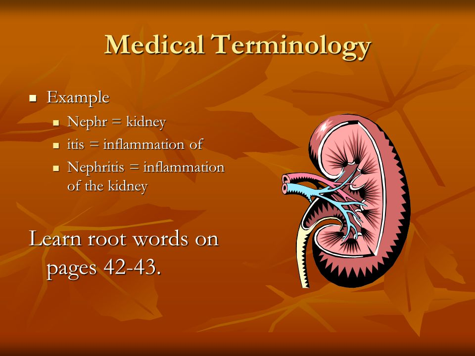 Medical Terminology Did you know that many medical terms have Greek or Latin roots? Did you know that many medical terms have Greek or Latin roots? St
