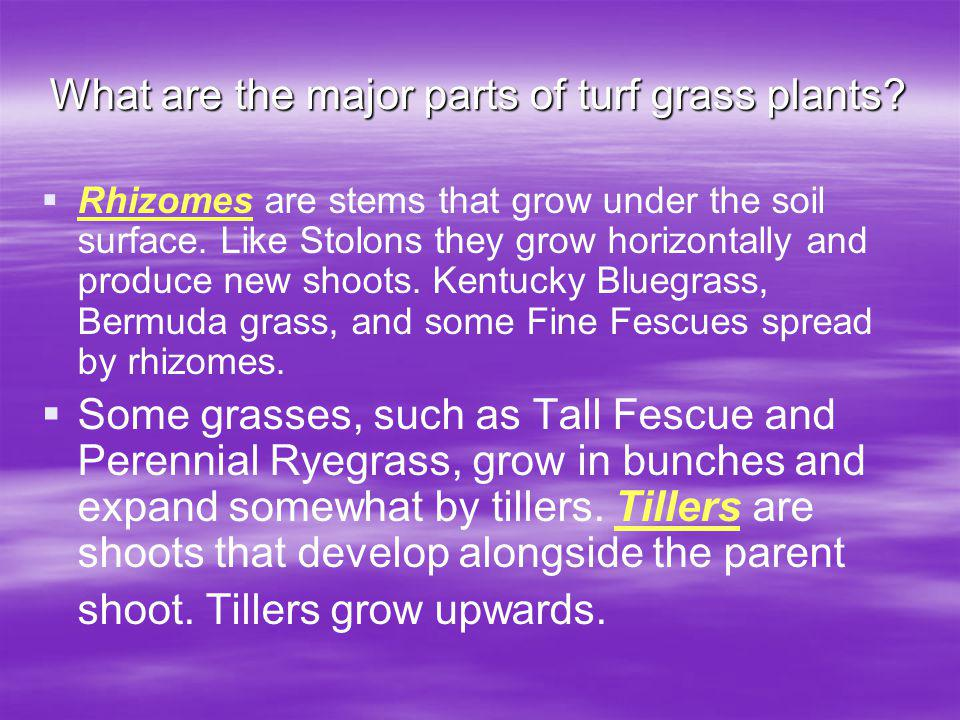 What are the major parts of turf grass plants.Rhizomes are stems that grow under the soil surface.