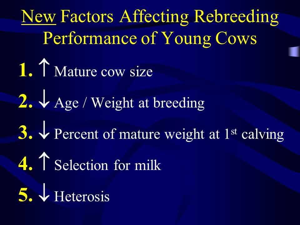Beef Heifer/Cow Growth