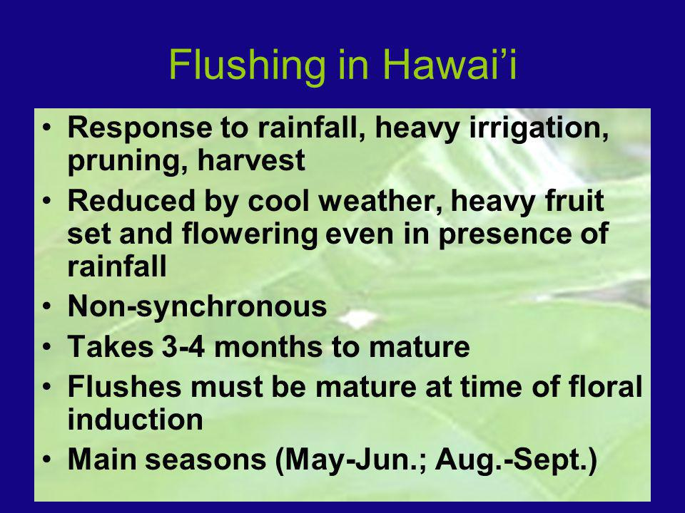 Flushing in Hawaii Response to rainfall, heavy irrigation, pruning, harvest Reduced by cool weather, heavy fruit set and flowering even in presence of rainfall Non-synchronous Takes 3-4 months to mature Flushes must be mature at time of floral induction Main seasons (May-Jun.; Aug.-Sept.)