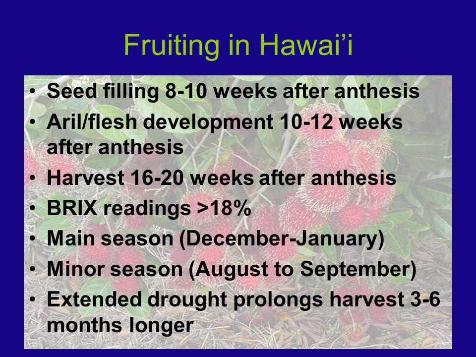Fruiting in Hawaii Seed filling 8-10 weeks after anthesis Aril/flesh development weeks after anthesis Harvest weeks after anthesis BRIX readings >18% Main season (December-January) Minor season (August to September) Extended drought prolongs harvest 3-6 months longer