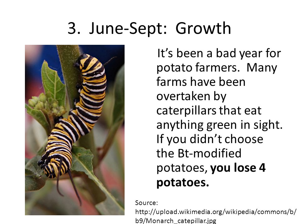 4.June-Sept: Growth Its been a very windy year, leading to greater amounts of weed seed dispersal.