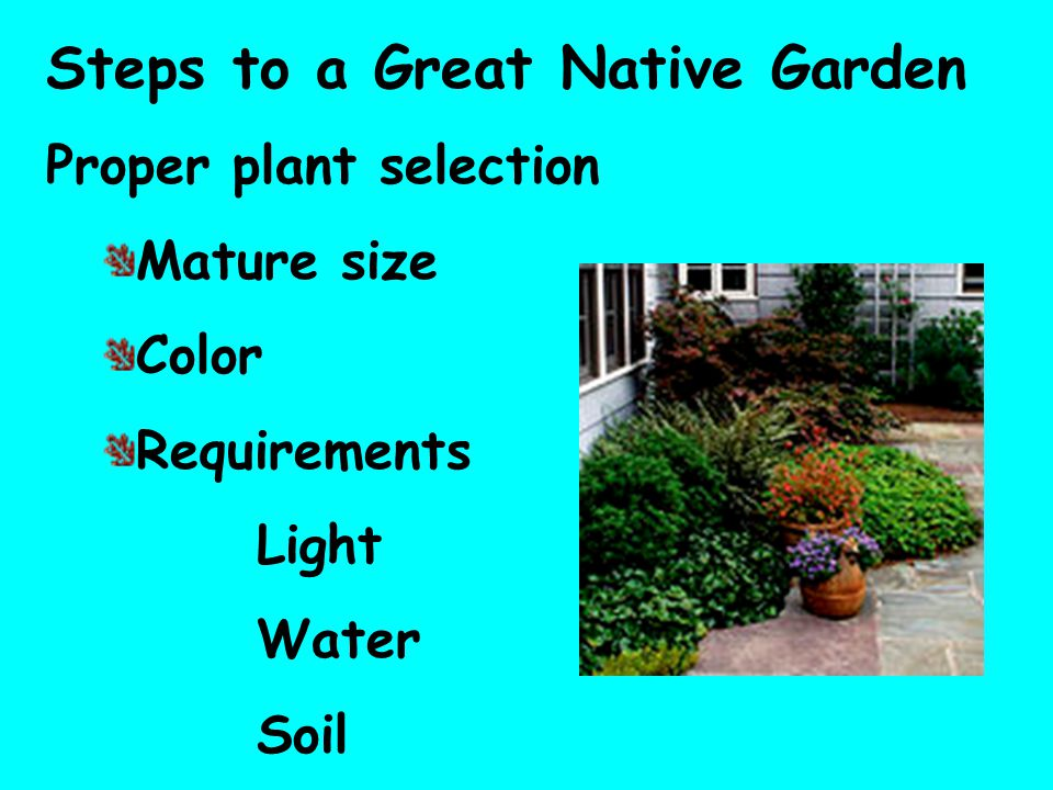 Steps to a Great Native Garden Proper plant selection Mature size Color Requirements Light Water Soil