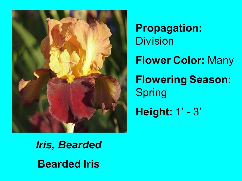 Iris, Bearded Bearded Iris Propagation: Division Flower Color: Many Flowering Season: Spring Height: 1 - 3
