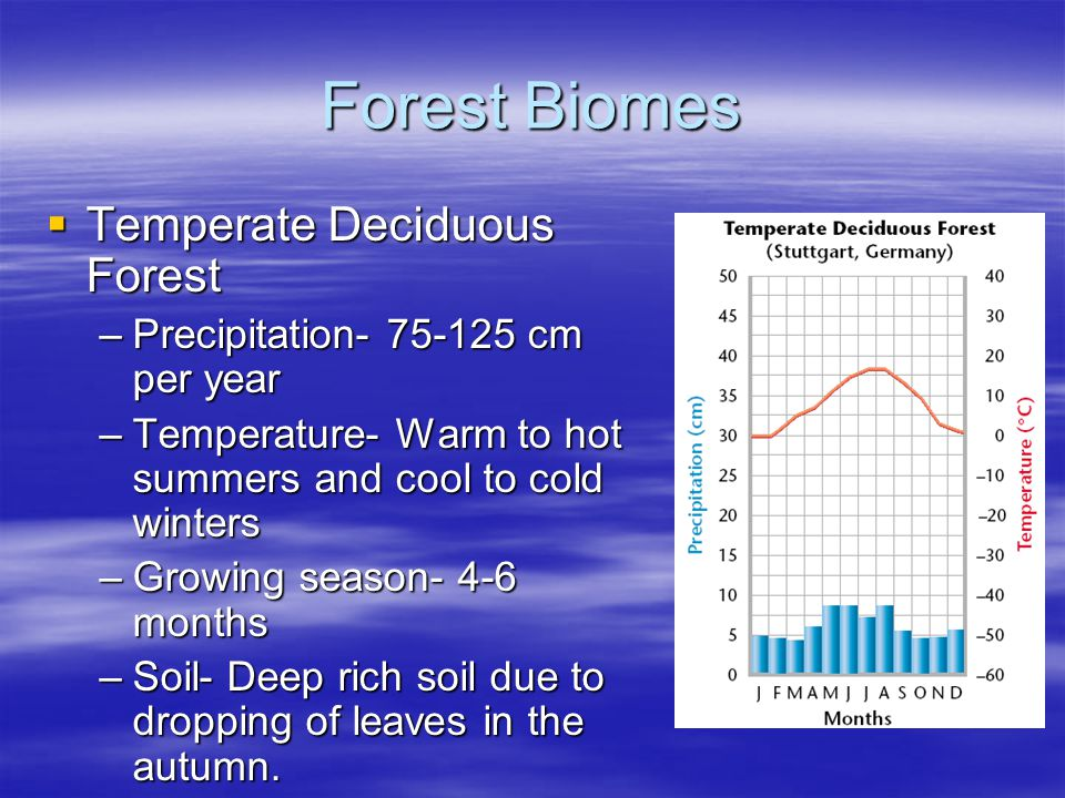 Forest Biomes Temperate Deciduous Forest Temperate Deciduous Forest –Precipitation- 75-125 cm per year –Temperature- Warm to hot summers and cool to c