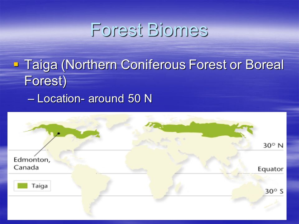 Forest Biomes Taiga (Northern Coniferous Forest or Boreal Forest) Taiga (Northern Coniferous Forest or Boreal Forest) –Location- around 50 N