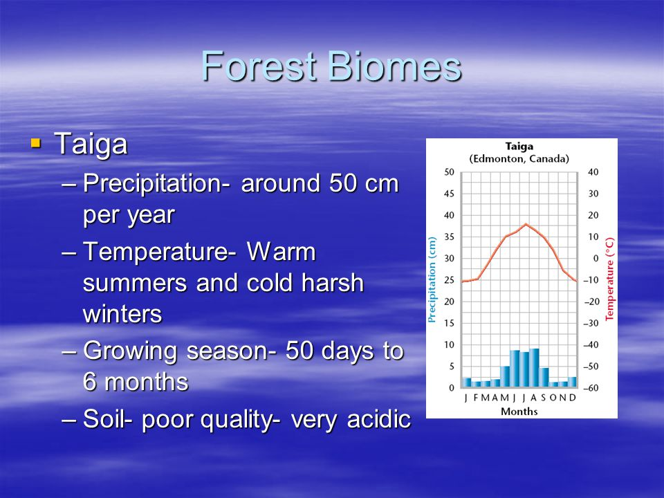 Forest Biomes Taiga Taiga –Precipitation- around 50 cm per year –Temperature- Warm summers and cold harsh winters –Growing season- 50 days to 6 months