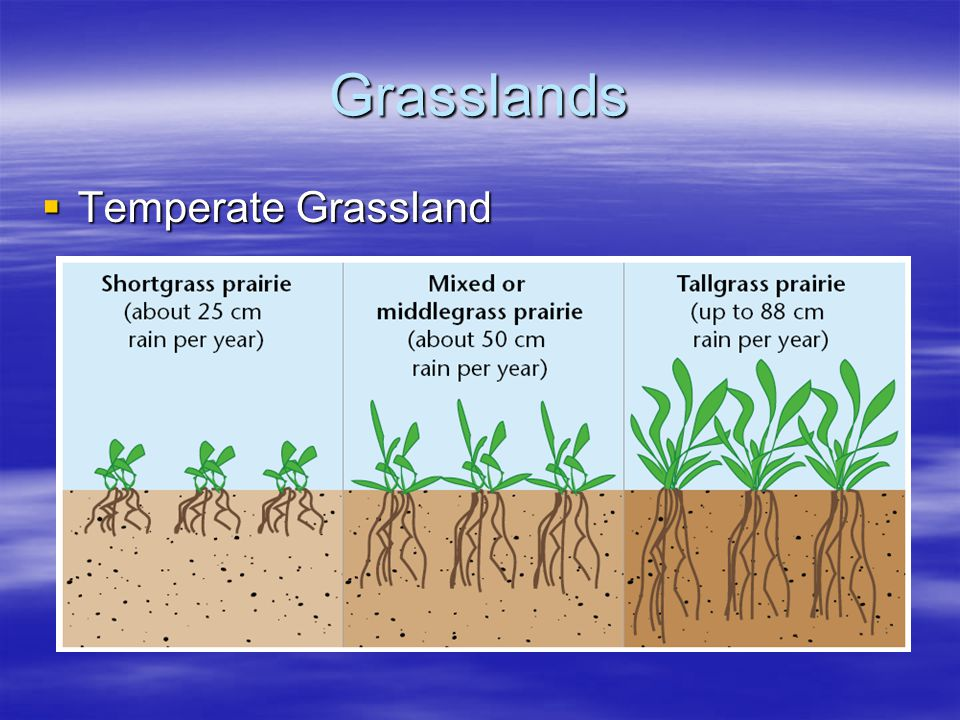 Grasslands Temperate Grassland Temperate Grassland