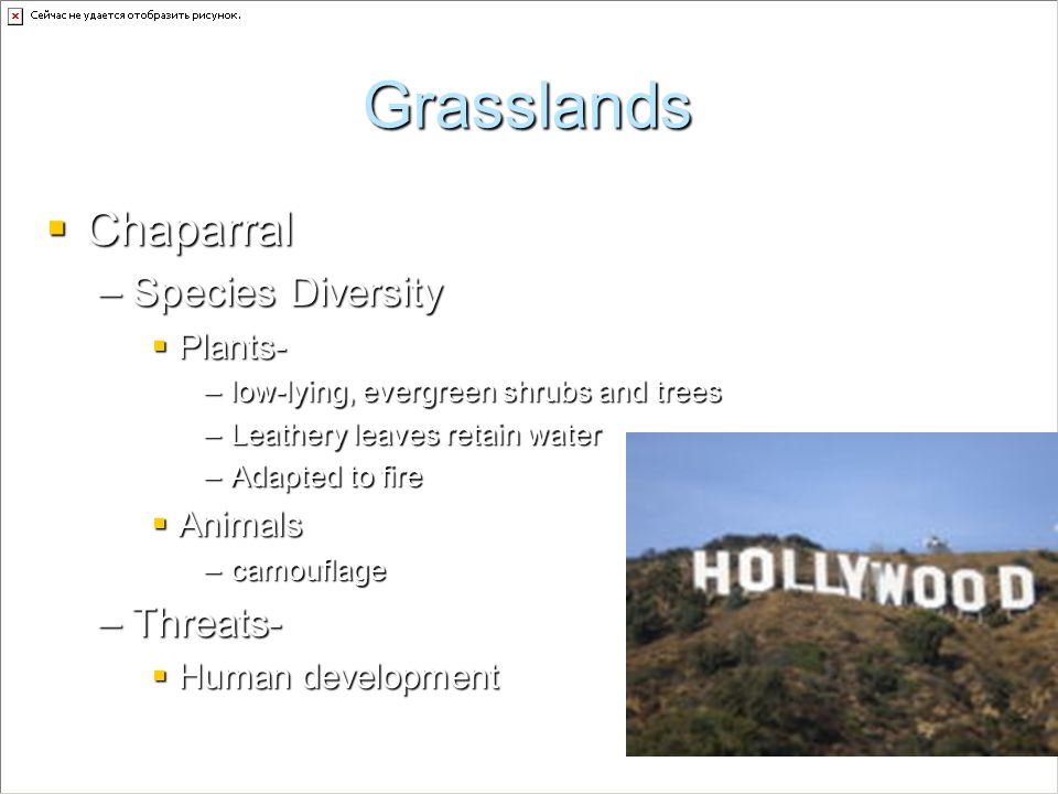 Grasslands Chaparral Chaparral –Species Diversity Plants- Plants- –low-lying, evergreen shrubs and trees –Leathery leaves retain water –Adapted to fir