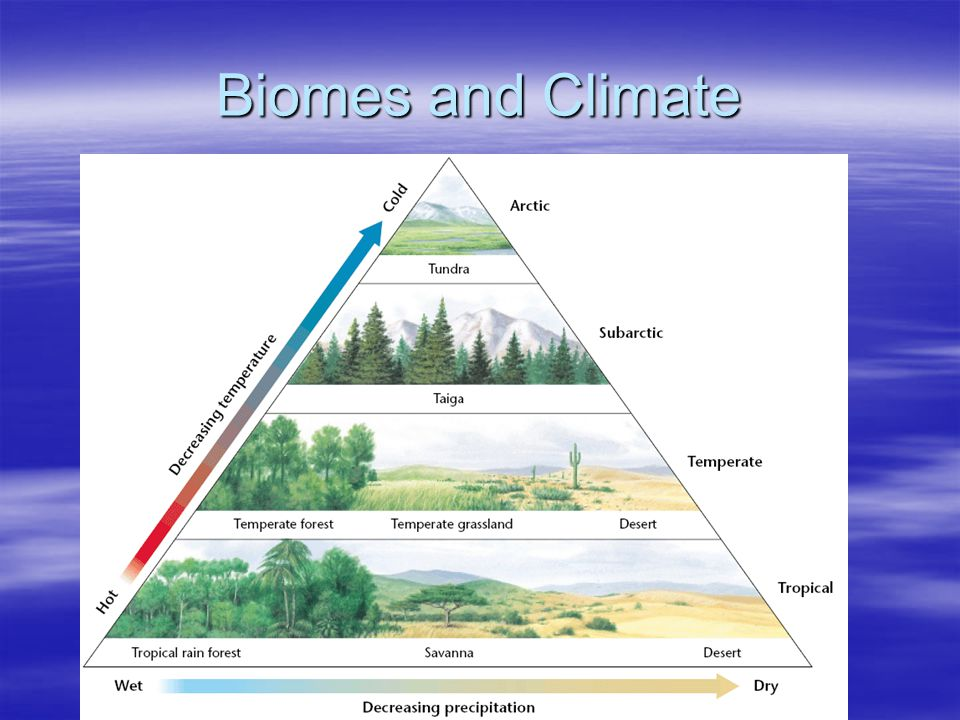 Forest Biomes Taiga Taiga –Precipitation- around 50 cm per year –Temperature- Warm summers and cold harsh winters –Growing season- 50 days to 6 months –Soil- poor quality- very acidic