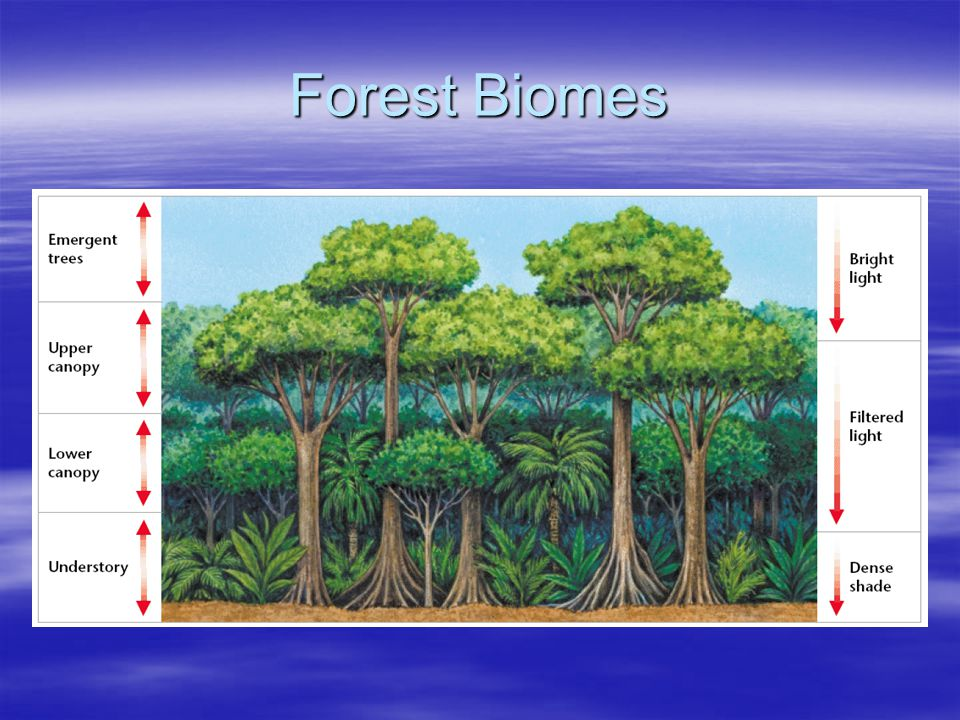 Forest Biomes