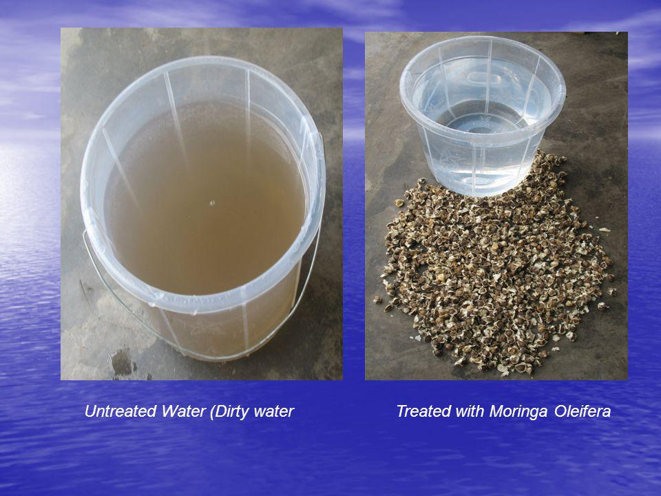 Untreated Water (Dirty water Treated with Moringa Oleifera