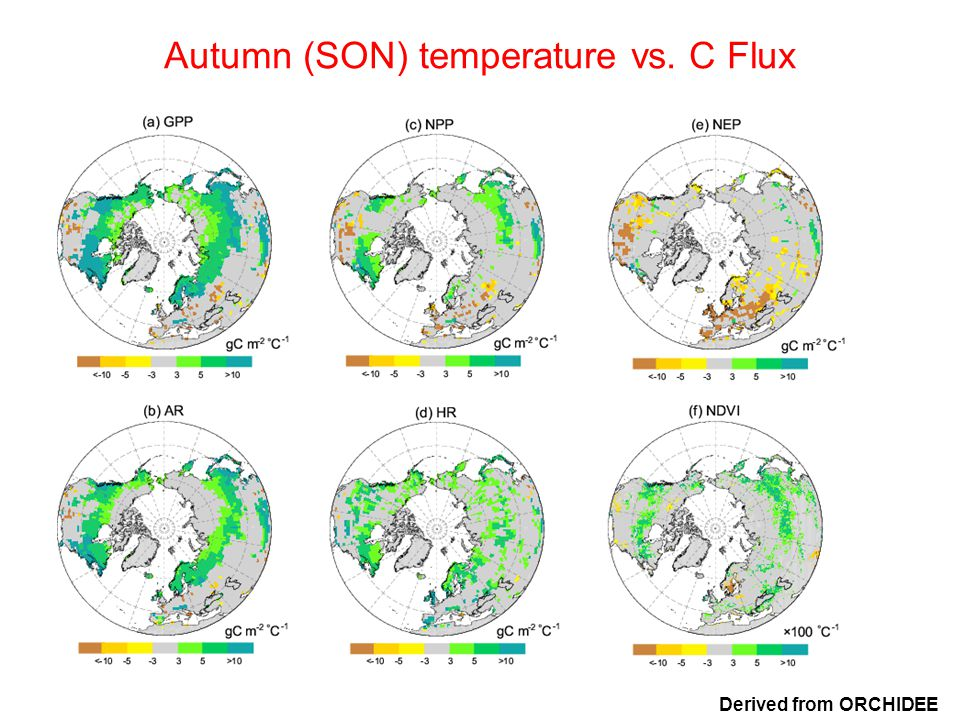 Autumn (SON) temperature vs. C Flux