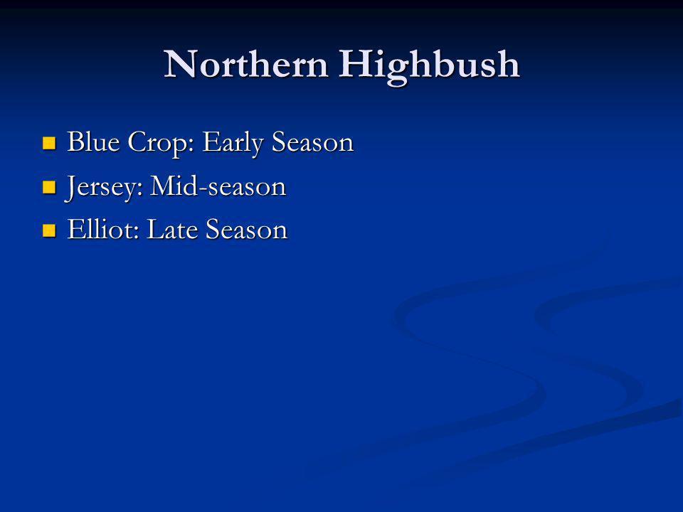 Northern Highbush Blue Crop: Early Season Blue Crop: Early Season Jersey: Mid-season Jersey: Mid-season Elliot: Late Season Elliot: Late Season