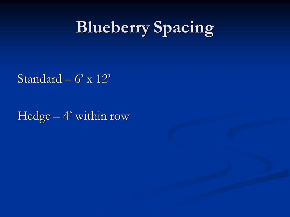 Blueberry Spacing Standard – 6 x 12 Hedge – 4 within row
