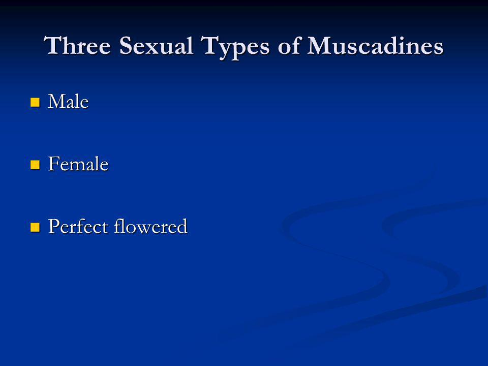 Three Sexual Types of Muscadines Male Male Female Female Perfect flowered Perfect flowered
