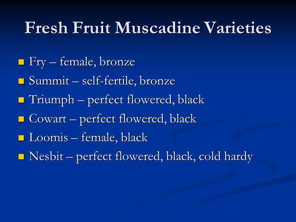 Fresh Fruit Muscadine Varieties Fry – female, bronze Fry – female, bronze Summit – self-fertile, bronze Summit – self-fertile, bronze Triumph – perfec