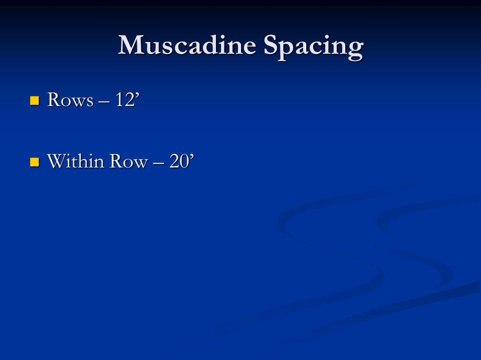 Muscadine Spacing Rows – 12 Rows – 12 Within Row – 20 Within Row – 20