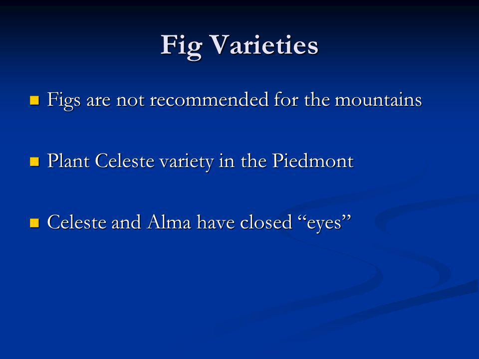 Fig Varieties Figs are not recommended for the mountains Figs are not recommended for the mountains Plant Celeste variety in the Piedmont Plant Celest